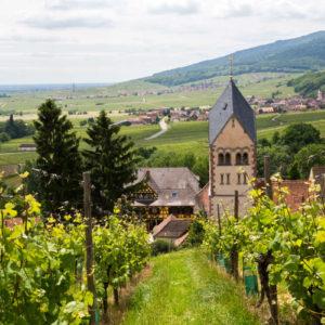 route des vins Itterswiller